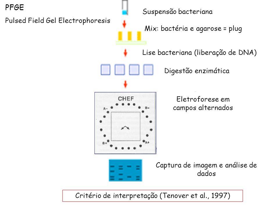 PFGE Pulsed Field Gel Electrophoresis Suspensão bacteriana