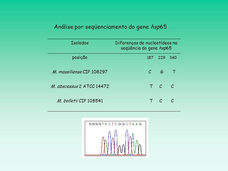Análise por seqüenciamento do gene hsp65
