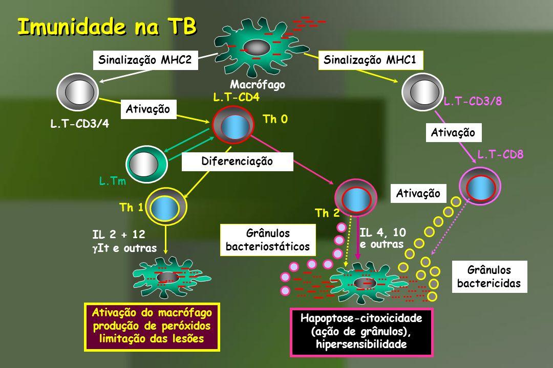 Hapoptose-citoxicidade (ação de grânulos), hipersensibilidade