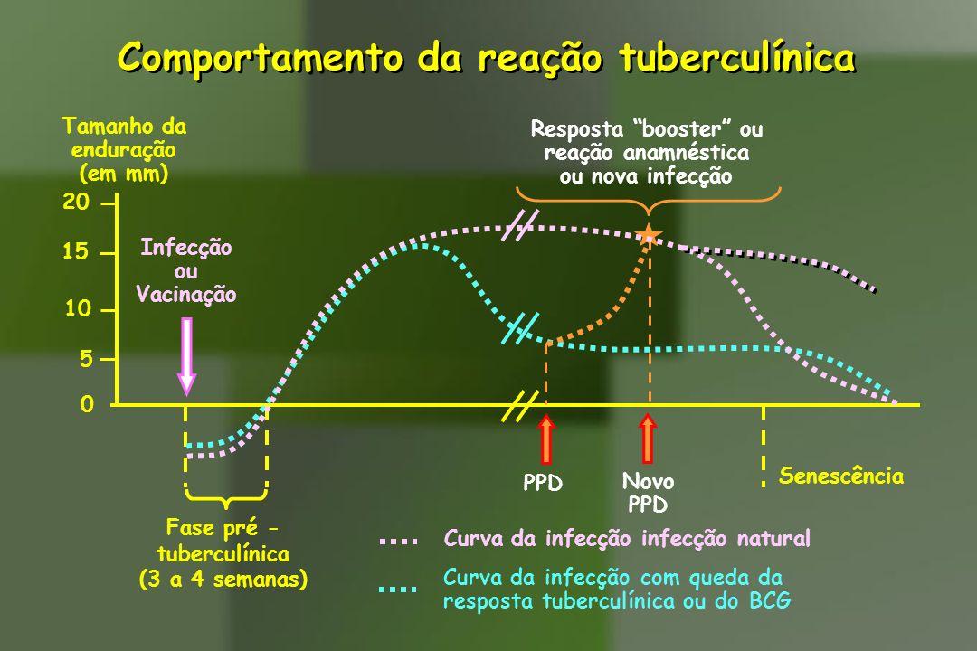 Comportamento da reação tuberculínica