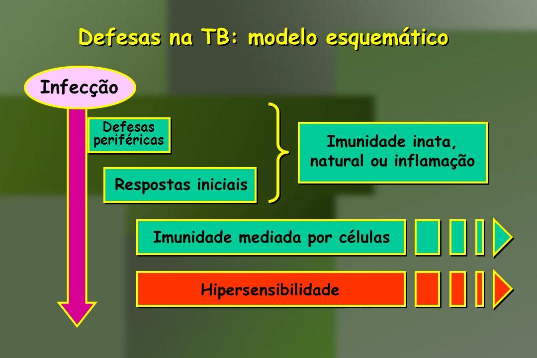 Defesas na TB: modelo esquemático