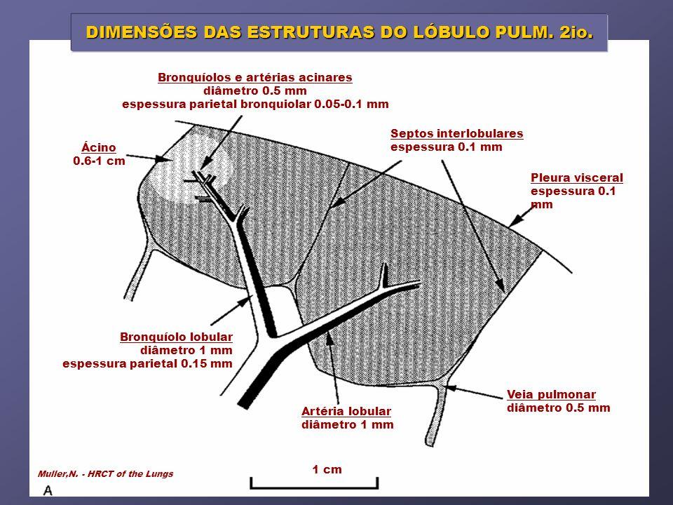 DIMENSÕES DAS ESTRUTURAS DO LÓBULO PULM. 2io.