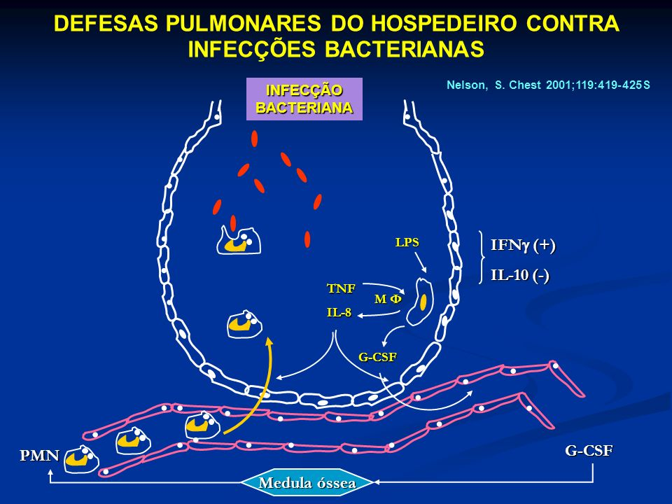 DEFESAS PULMONARES DO HOSPEDEIRO CONTRA INFECÇÕES BACTERIANAS