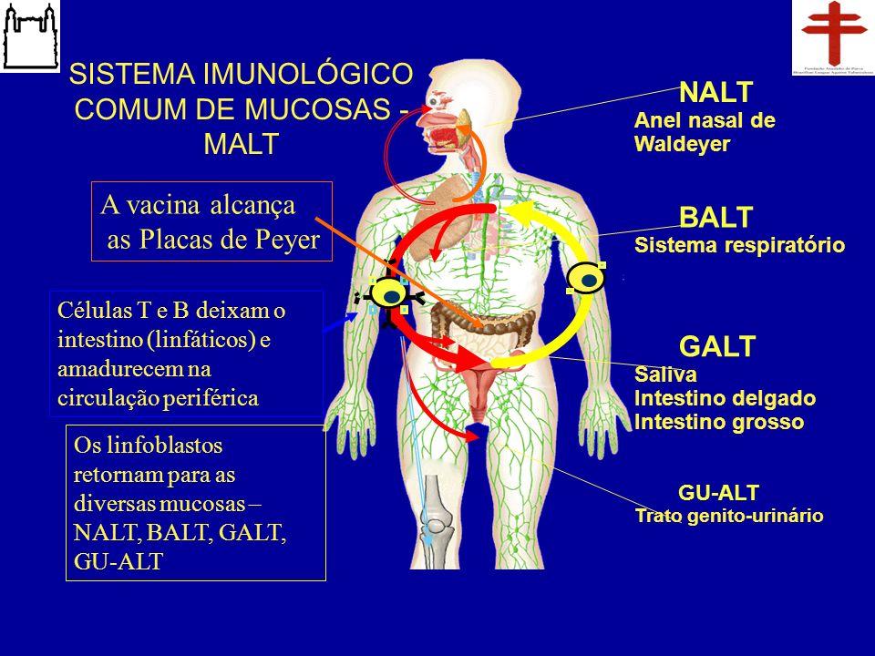 SISTEMA IMUNOLÓGICO COMUM DE MUCOSAS - MALT