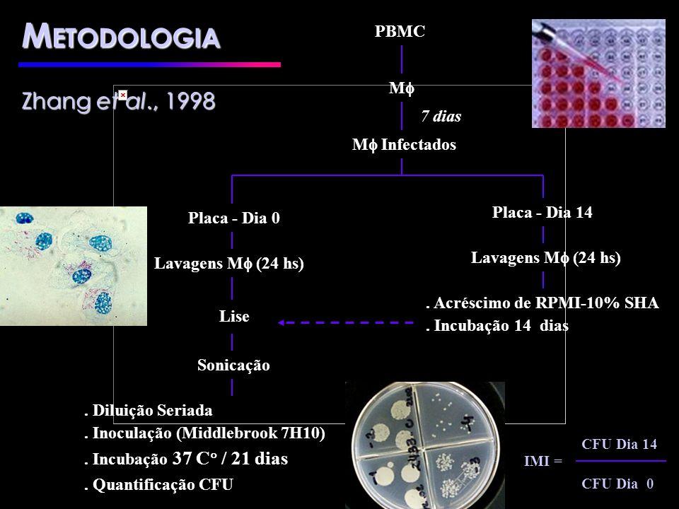 METODOLOGIA Zhang et al., 1998 PBMC M 7 dias M Infectados