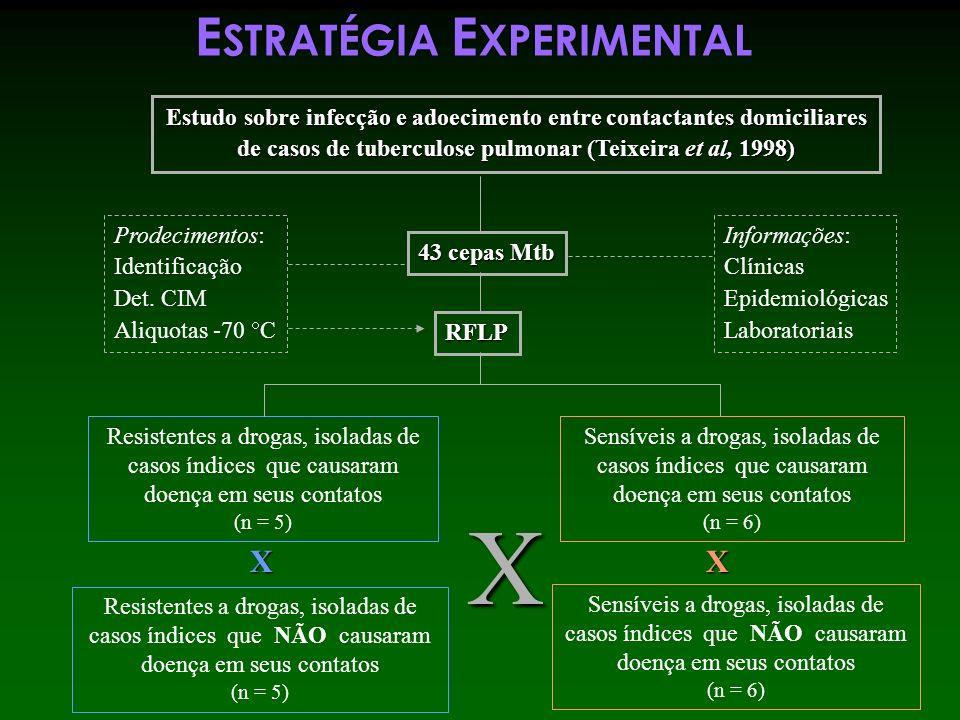 X ESTRATÉGIA EXPERIMENTAL X X