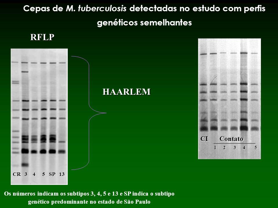 Cepas de M. tuberculosis detectadas no estudo com perfis genéticos semelhantes
