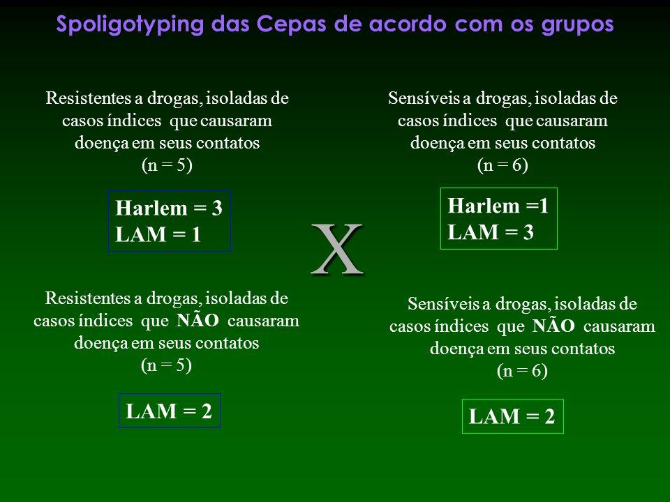 Spoligotyping das Cepas de acordo com os grupos