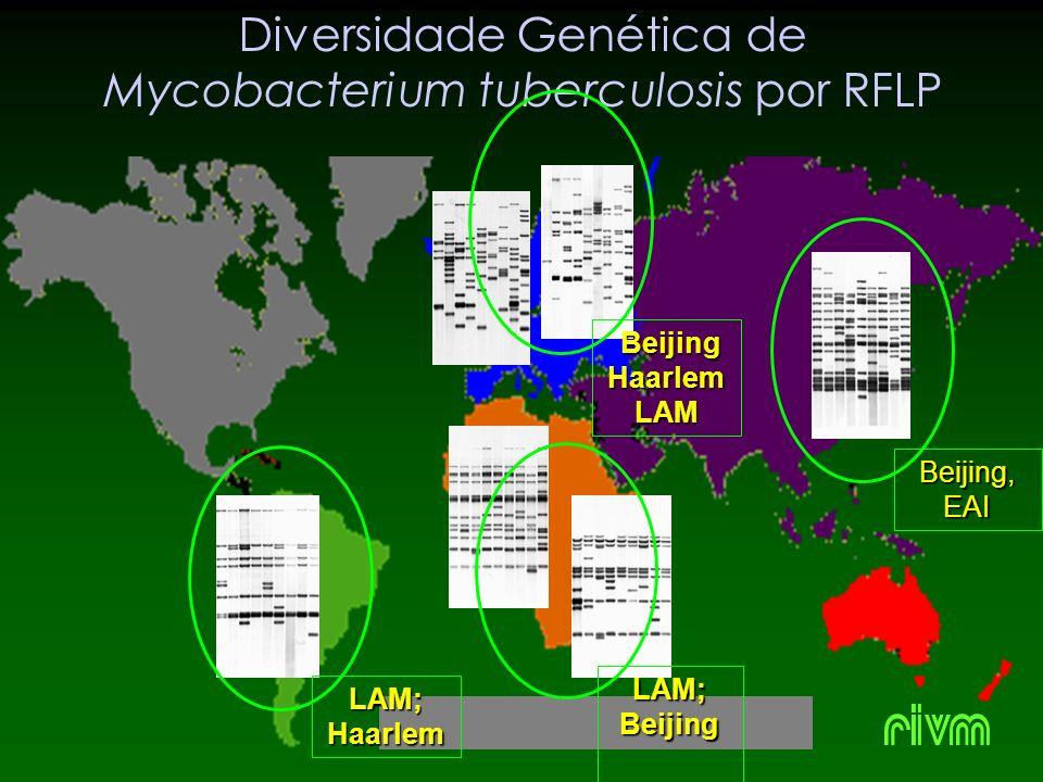 Diversidade Genética de Mycobacterium tuberculosis por RFLP