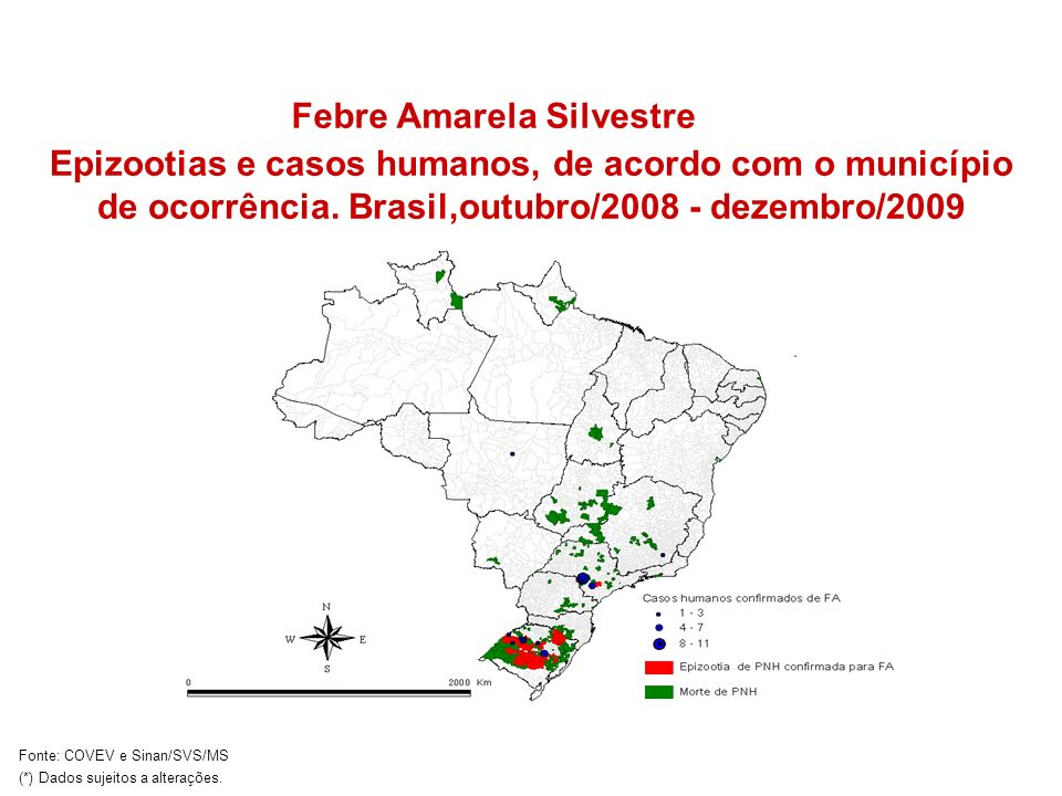 Febre Amarela Silvestre