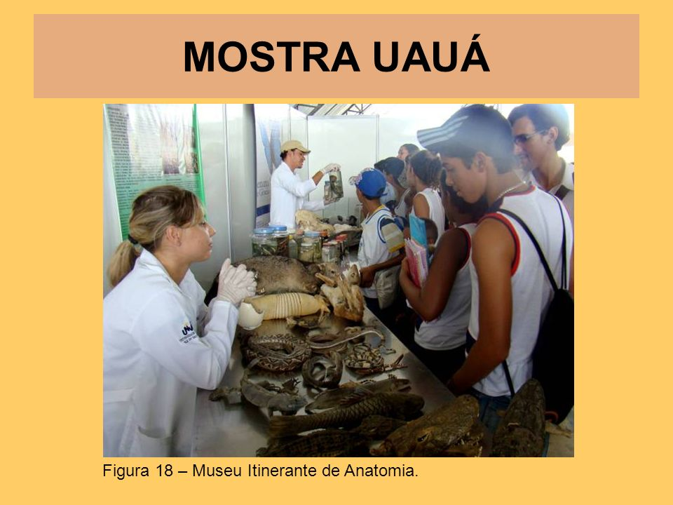 MOSTRA UAUÁ Figura 18 – Museu Itinerante de Anatomia.