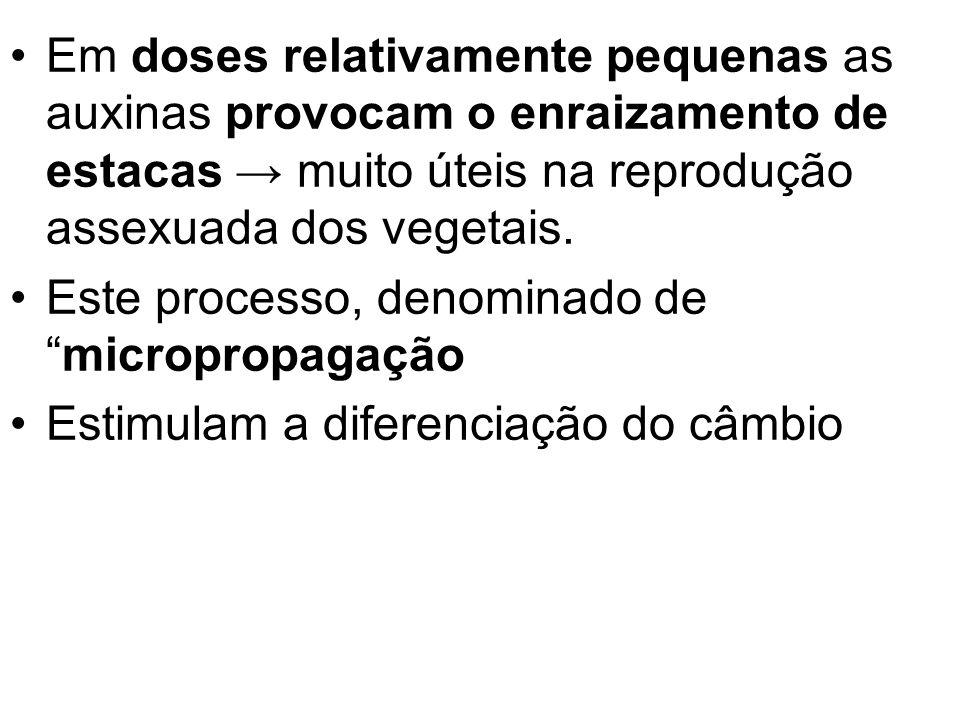 Em doses relativamente pequenas as auxinas provocam o enraizamento de estacas → muito úteis na reprodução assexuada dos vegetais.