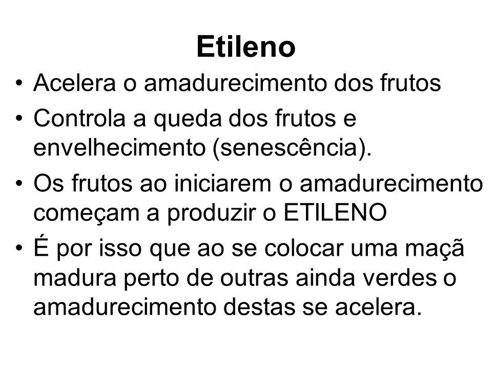 Etileno Acelera o amadurecimento dos frutos
