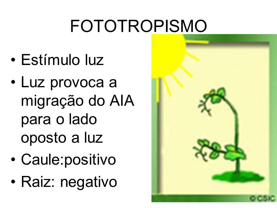 FOTOTROPISMO Estímulo luz