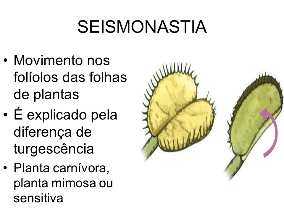 SEISMONASTIA Movimento nos folíolos das folhas de plantas