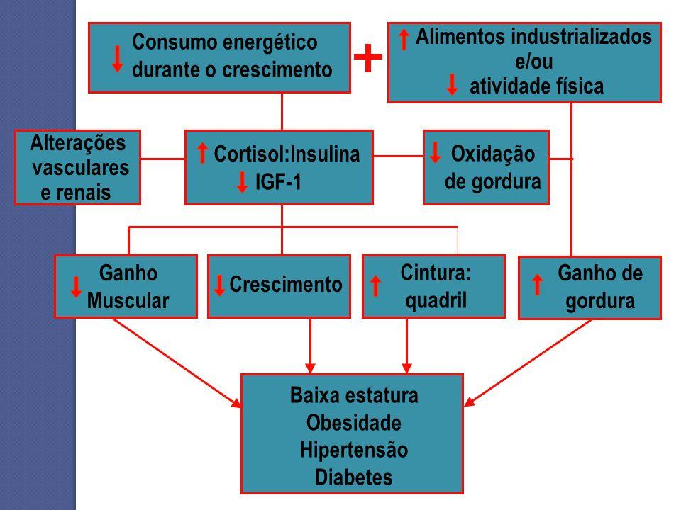 Alimentos industrializados e/ou
