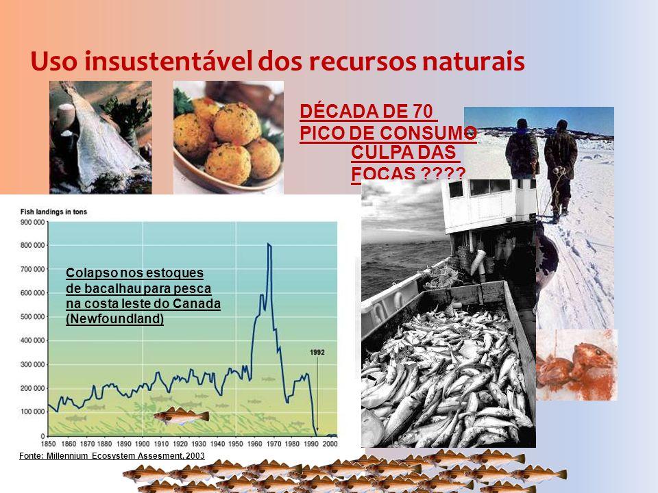 Uso insustentável dos recursos naturais