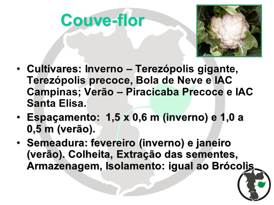 Couve-flor Cultivares: Inverno – Terezópolis gigante, Terezópolis precoce, Bola de Neve e IAC Campinas; Verão – Piracicaba Precoce e IAC Santa Elisa.