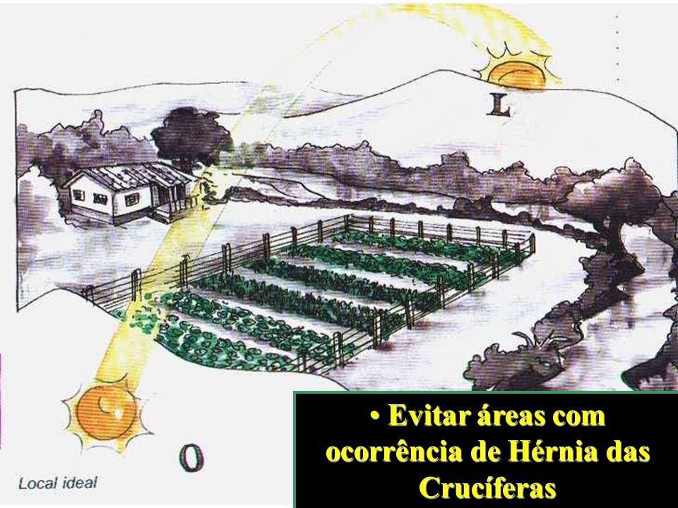 Evitar áreas com ocorrência de Hérnia das Crucíferas