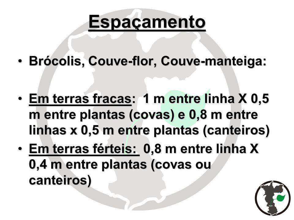 Espaçamento Brócolis, Couve-flor, Couve-manteiga: