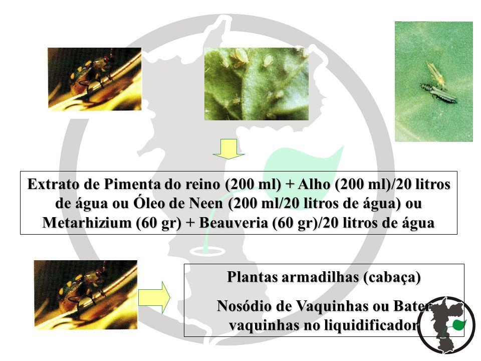 Plantas armadilhas (cabaça)