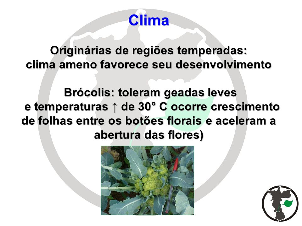 Clima Originárias de regiões temperadas: clima ameno favorece seu desenvolvimento Brócolis: toleram geadas leves e temperaturas ↑ de 30° C ocorre crescimento de folhas entre os botões florais e aceleram a abertura das flores)
