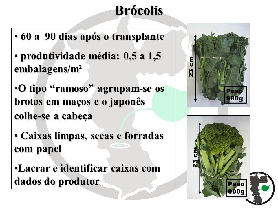 Brócolis 60 a 90 dias após o transplante