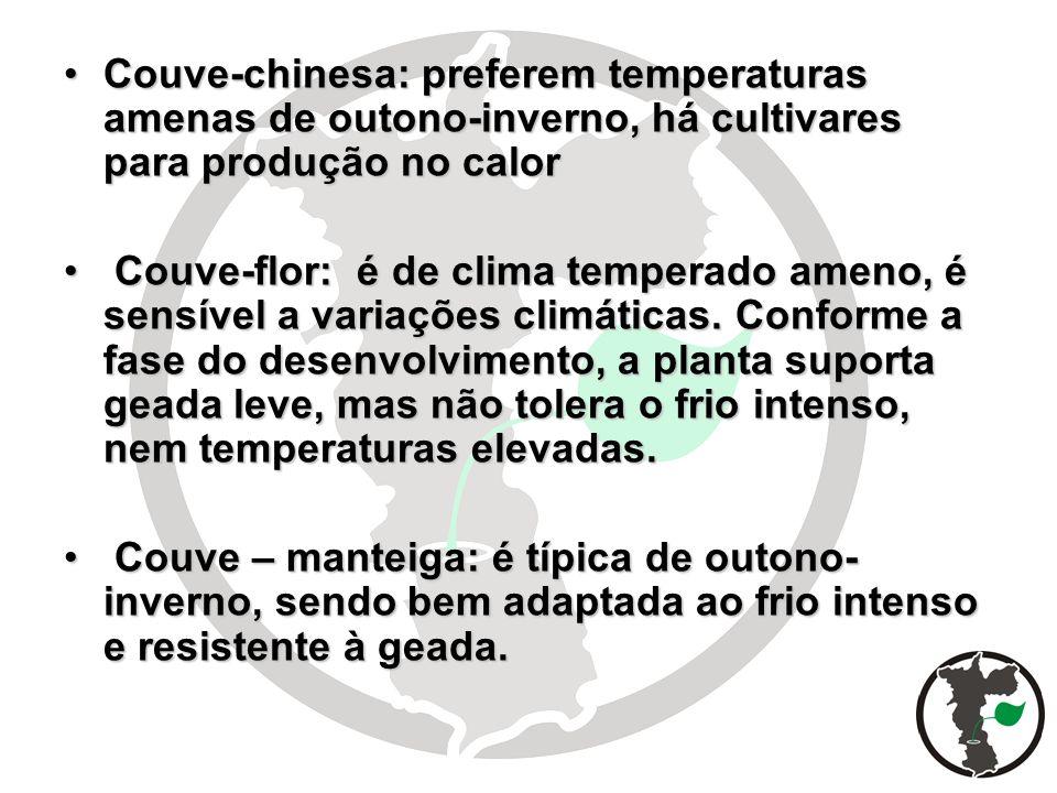 Couve-chinesa: preferem temperaturas amenas de outono-inverno, há cultivares para produção no calor