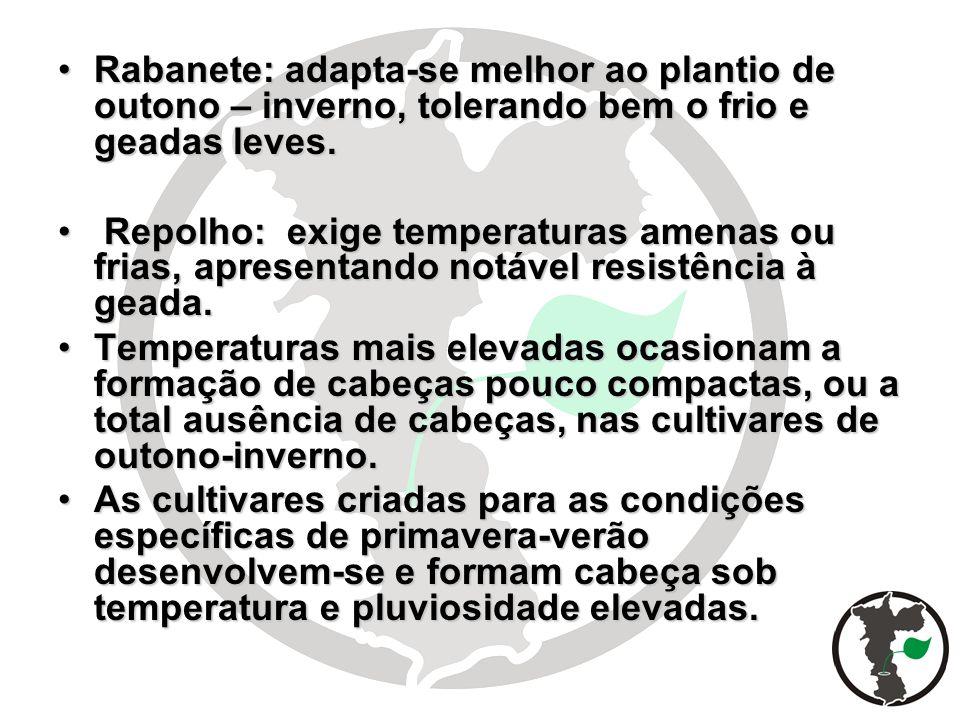 Rabanete: adapta-se melhor ao plantio de outono – inverno, tolerando bem o frio e geadas leves.