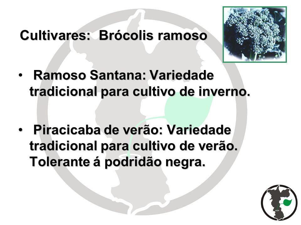 Cultivares: Brócolis ramoso