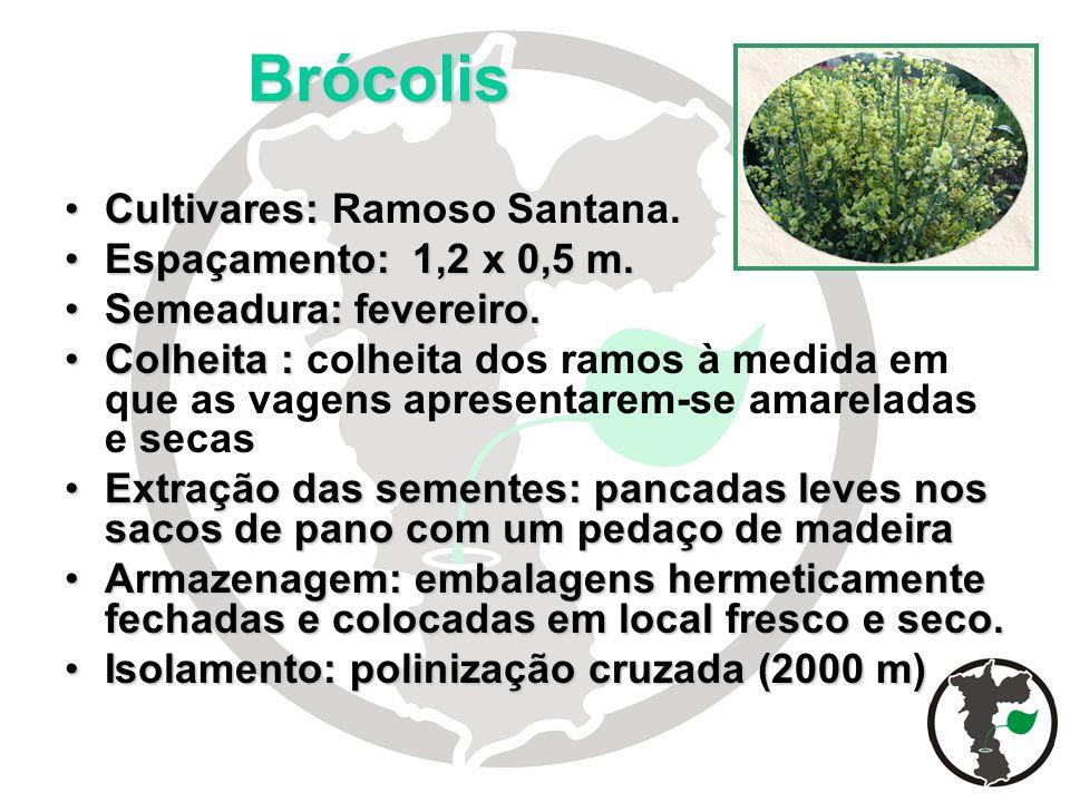 Brócolis Cultivares: Ramoso Santana. Espaçamento: 1,2 x 0,5 m.