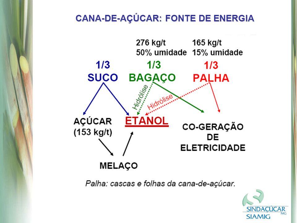 CANA-DE-AÇÚCAR: FONTE DE ENERGIA