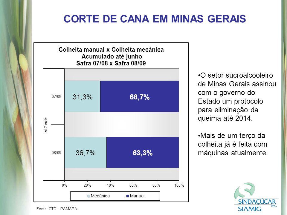 CORTE DE CANA EM MINAS GERAIS