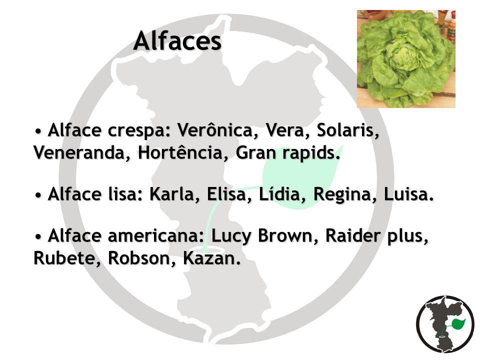 AlfacesAlface crespa: Verônica, Vera, Solaris, Veneranda, Hortência, Gran rapids. Alface lisa: Karla, Elisa, Lídia, Regina, Luisa.