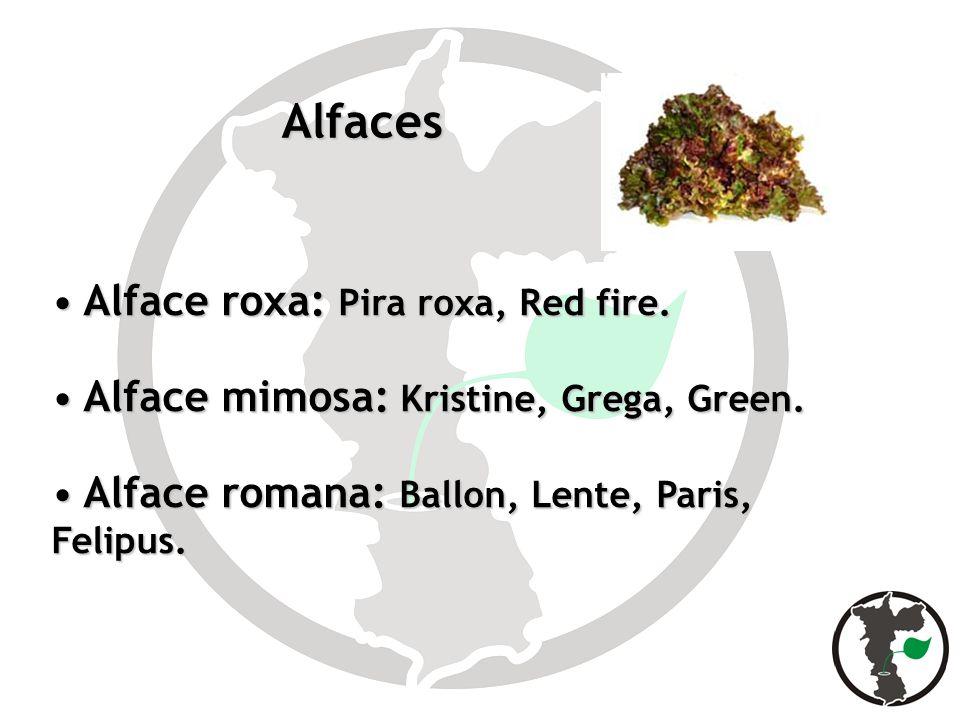 Alfaces Alface roxa: Pira roxa, Red fire.
