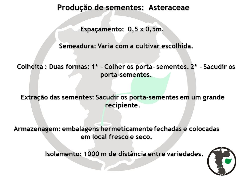 Produção de sementes: Asteraceae