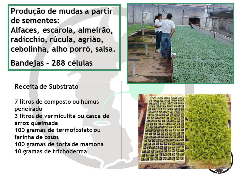 Produção de mudas a partir de sementes: