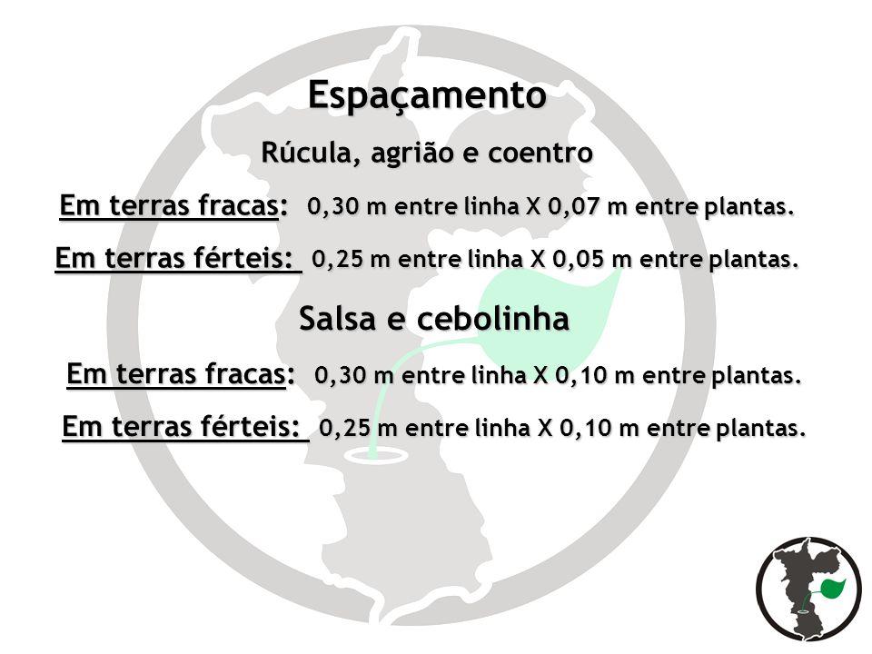 Espaçamento Salsa e cebolinha Rúcula, agrião e coentro