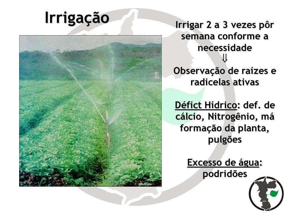 Irrigação Irrigar 2 a 3 vezes pôr semana conforme a necessidade 