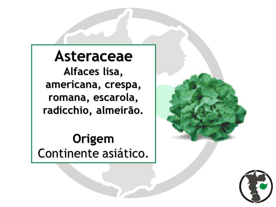 Asteraceae Origem Continente asiático.