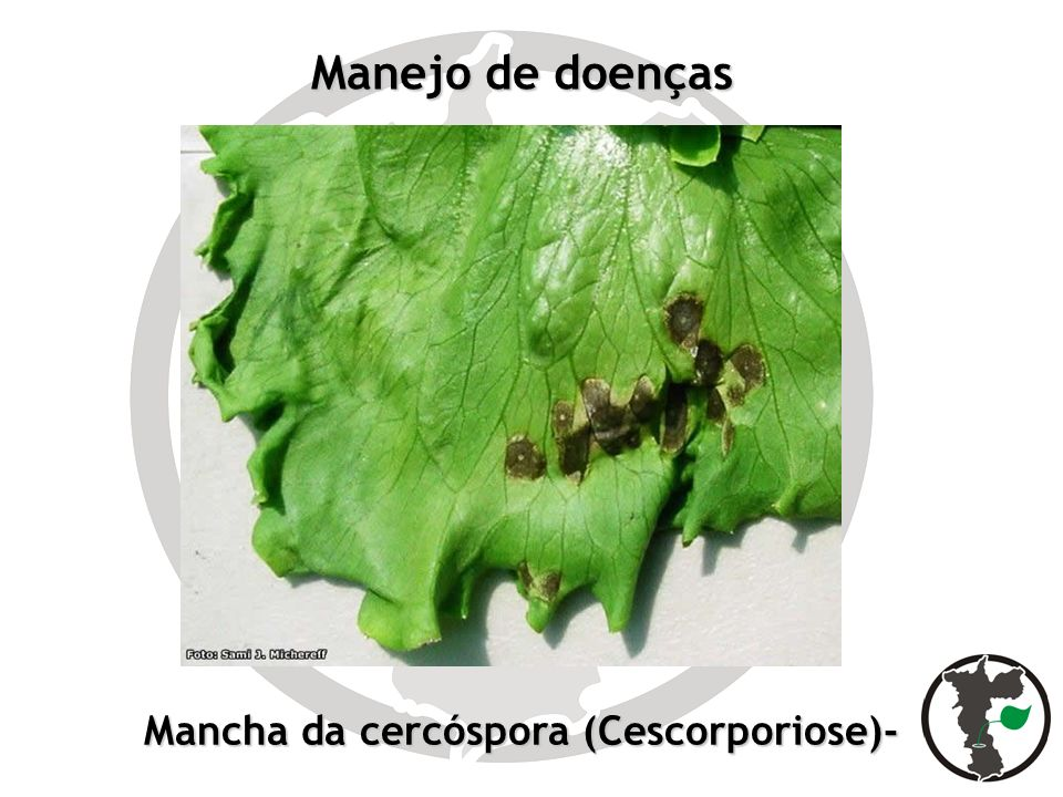 Mancha da cercóspora (Cescorporiose)-