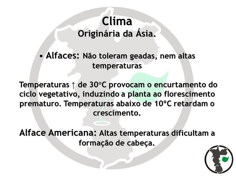 Clima Originária da Ásia.