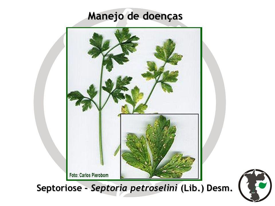 Septoriose - Septoria petroselini (Lib.) Desm.