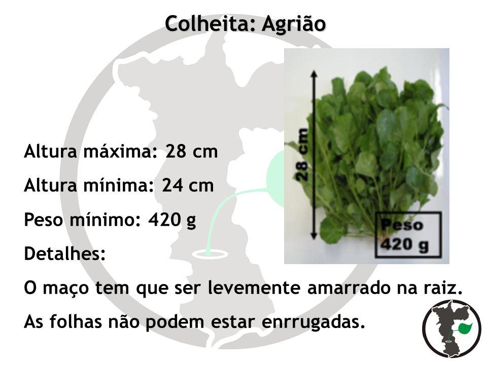 Colheita: Agrião Altura máxima: 28 cm Altura mínima: 24 cm