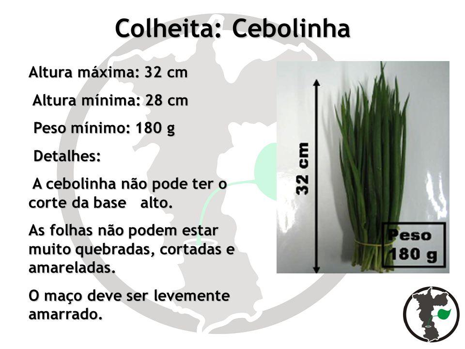 Colheita: Cebolinha Altura máxima: 32 cm Altura mínima: 28 cm