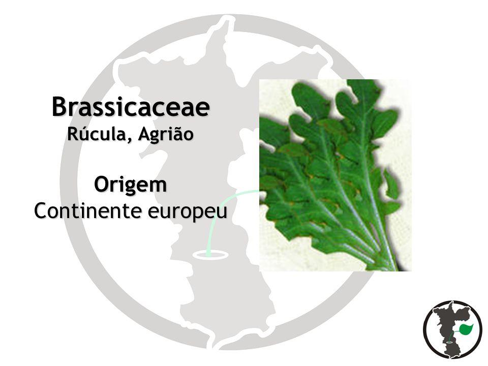 Brassicaceae Rúcula, Agrião Origem Continente europeu