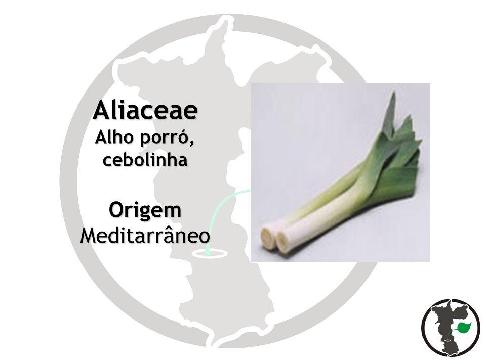 Aliaceae Alho porró, cebolinha Origem Meditarrâneo