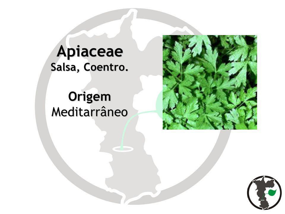Apiaceae Salsa, Coentro. Origem Meditarrâneo