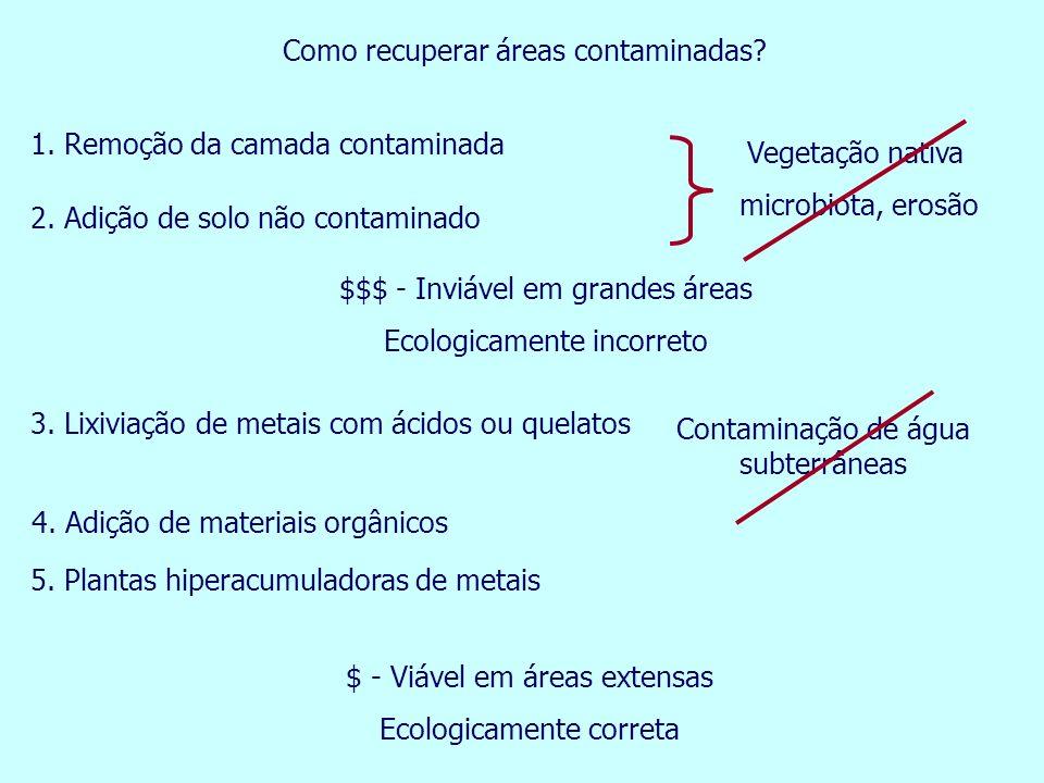 Como recuperar áreas contaminadas