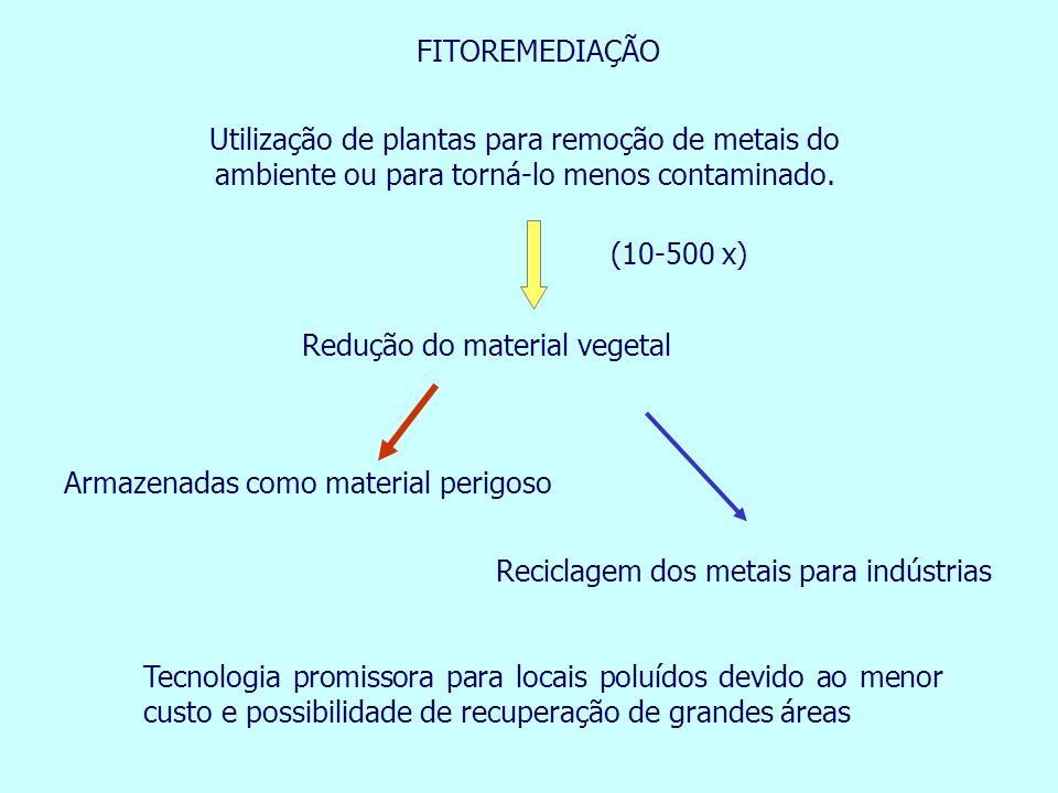 FITOREMEDIAÇÃO Utilização de plantas para remoção de metais do ambiente ou para torná-lo menos contaminado.